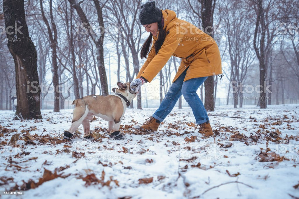 French Bulldog dog playingin the winter with woman stock photo
