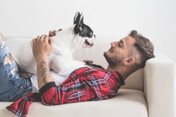 french bulldog dog with affectionate attitude with his owner - guy sofa foto e immagini stock