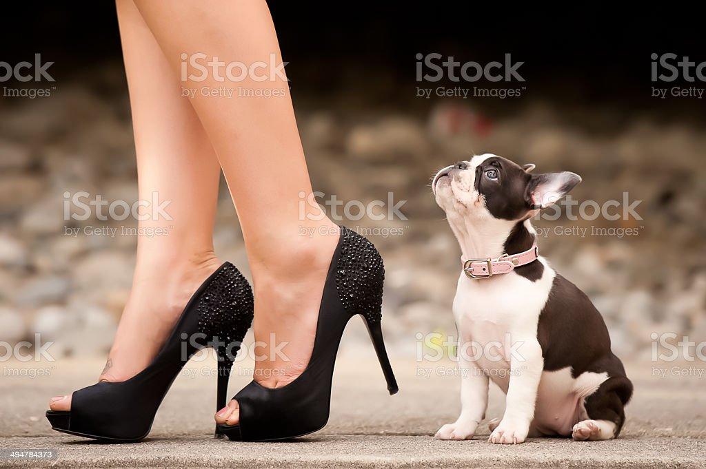 Bulldog francés taloneras - foto de stock