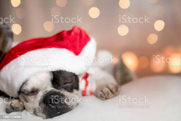 French bulldog in santa hat image picture id1092723698?b=1&k=6&m=1092723698&s=612x612&h=4wdjj7xtt3qoyogqjlmxe6aqtlmnahc0z6aull8wmug=