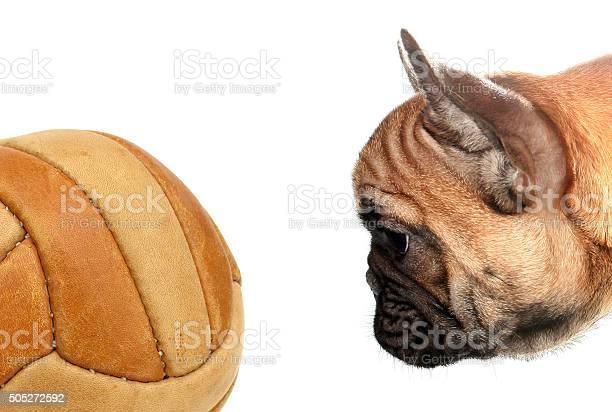 French bulldog looking soccer ball picture id505272592?b=1&k=6&m=505272592&s=612x612&h=  smvzf0yfarbhf0qe1je6hafvaajkz xbie19k8 h4=