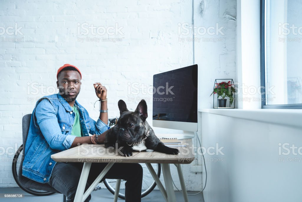 French bulldog lying on table with computer by handsome african american man stock photo