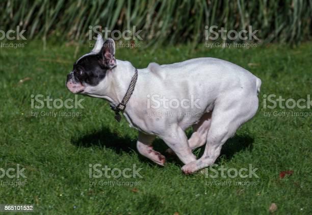 French bulldog picture id865101532?b=1&k=6&m=865101532&s=612x612&h=fao hrbpnezgxgttih7sah4qz kud2gysur0uccwkjk=