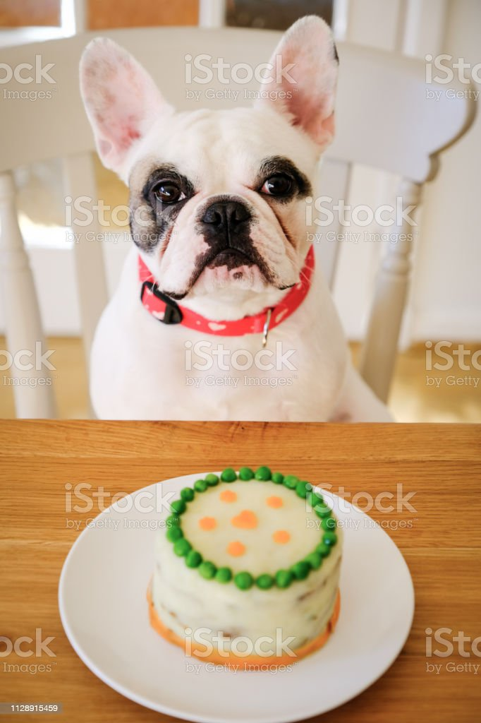 Excellent French Bulldog Posing With Homemade Birthday Cake Made From Minced Funny Birthday Cards Online Overcheapnameinfo