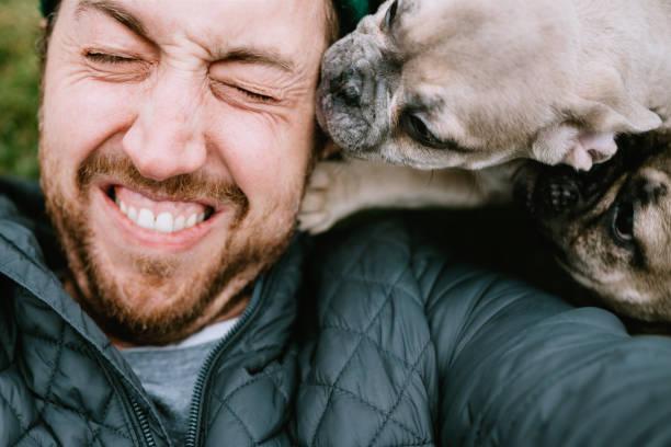 Französischer Bulldog Welpen Smother Owner mit Küssen – Foto