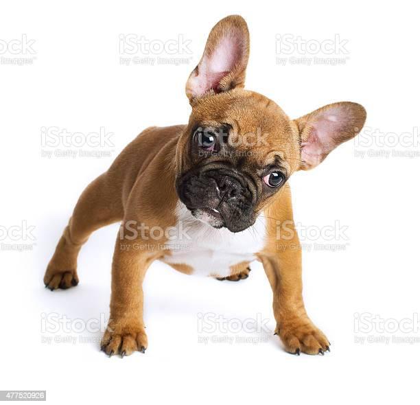 French bulldog puppy picture id477520926?b=1&k=6&m=477520926&s=612x612&h=5ozhkjqofv0fyyilf0oqeqd2eut4zsw0l0ovvd0ds1i=