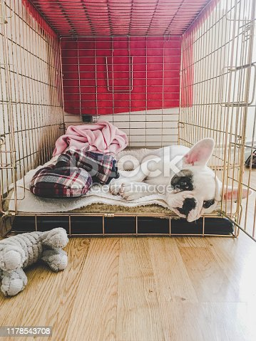 Frenchie puppy sleeping inside a crate
