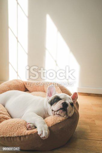French Bulldog Puppy sleeping on comfortable pet bed