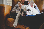 Man relaxing on sofa with his smartphone together with his Frenchie resting on his laps