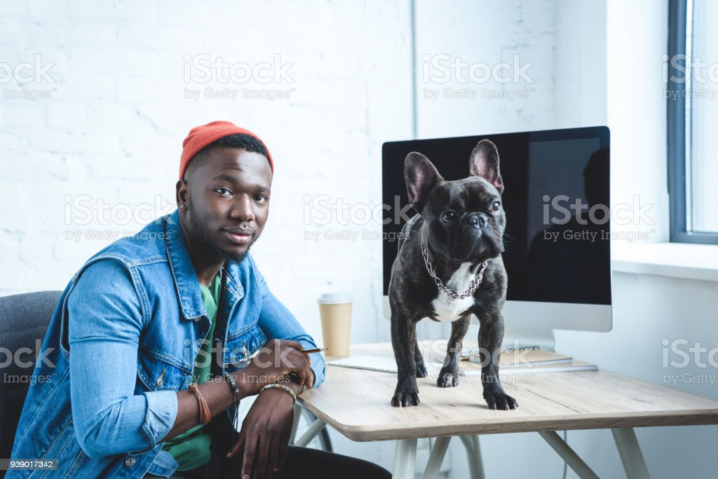 French bulldog standing on table with computer by young man freelancer stock photo