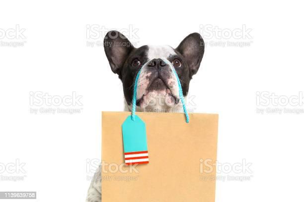 French bulldog with the shopping bag picture id1139639758?b=1&k=6&m=1139639758&s=612x612&h=0zhpsoifmczzyo4lolvhwlaopedoeoyf2currunzbfi=