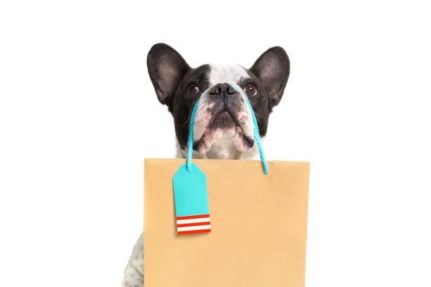 French bulldog with the shopping bag picture id1139639758?b=1&k=6&m=1139639758&s=612x612&w=0&h=r uae34idmyipzjwmggnmzp6jd7nd7iiz3ezxjhfzww=