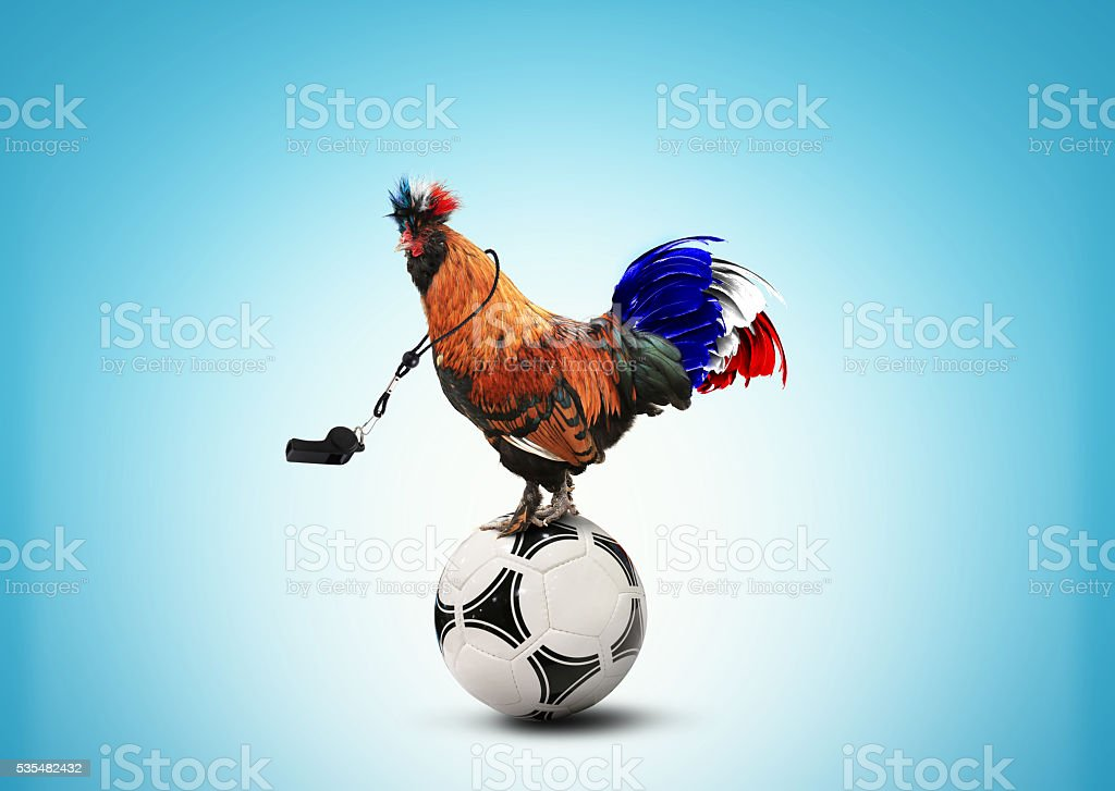 Français coq Couleur - Photo