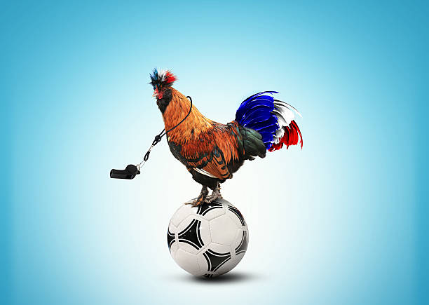 French colored rooster stock photo