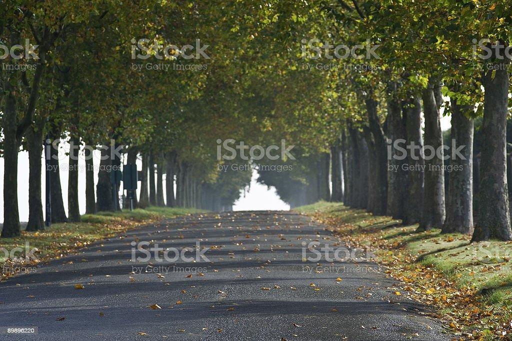 Französische Herbst Land Lane Lizenzfreies stock-foto