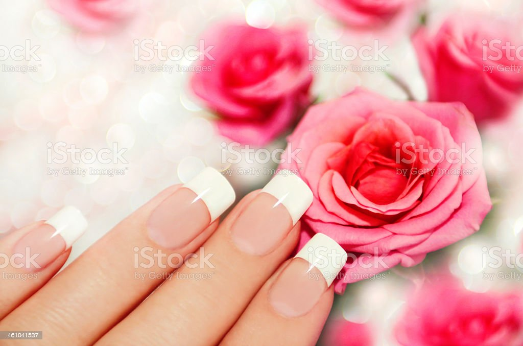 French manicured nails next to pink roses stock photo