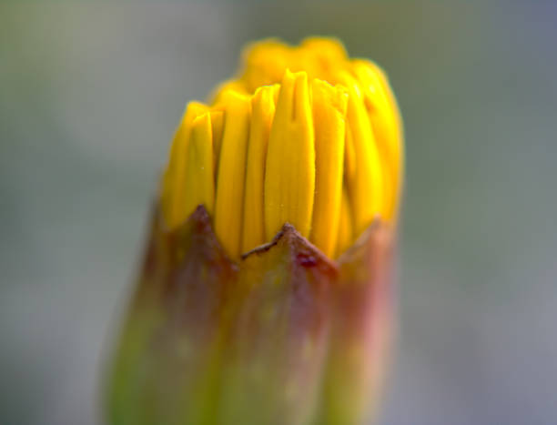 French Marigolds stock photo