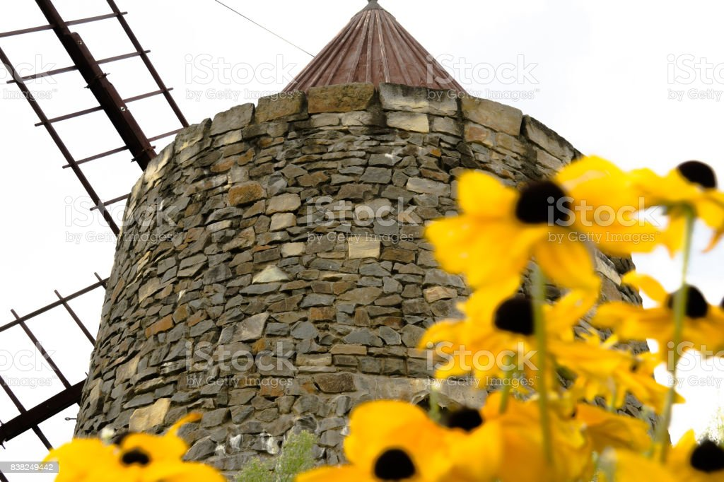 French mill with blurred yellow flowers in the foreground stock photo