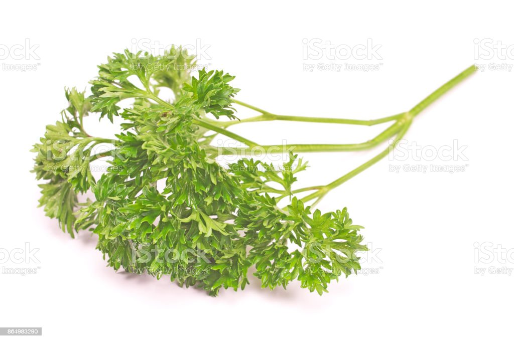 French Parsley Chervil Isolated On White Background Stock Photo