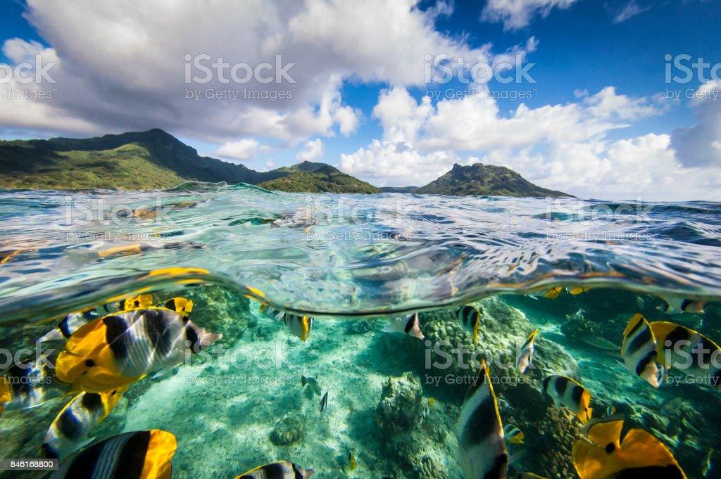 Français de Polynésie - Pacifique Sud - Photo