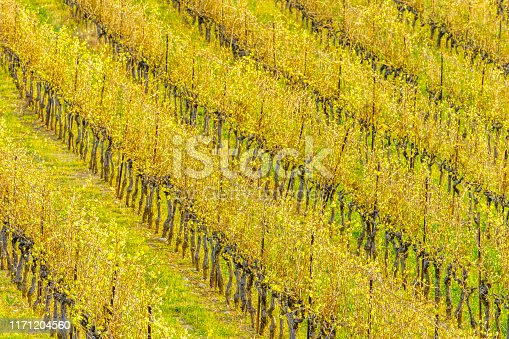 Farm and vineyards in Provence, France