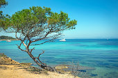 Aleppo Pine (Pinus halepensis) on a rocky shore against blue water of the Mediterranean Sea. The island of Porquerolles . French Riviera.