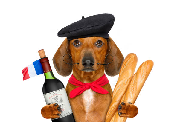 french  sausage  dog dachshund sausage dog with beret hat, isolated on white background,with red wine and baguette and french hat and flag beret stock pictures, royalty-free photos & images