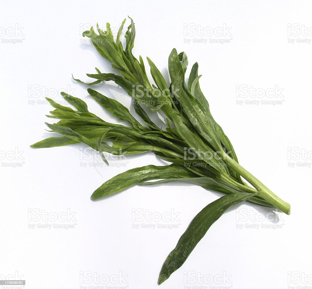French Tarragon royalty-free stock photo