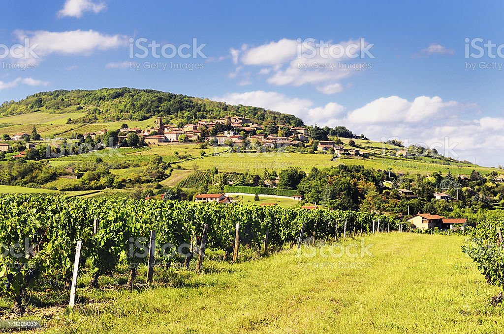 French village and vineyard stock photo