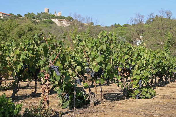 französische vineyard - gblu stock-fotos und bilder