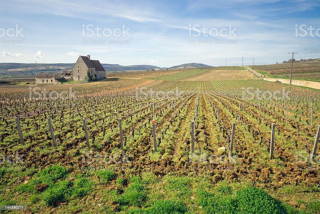 Vignoble français avec une ferme old stone house - Photo