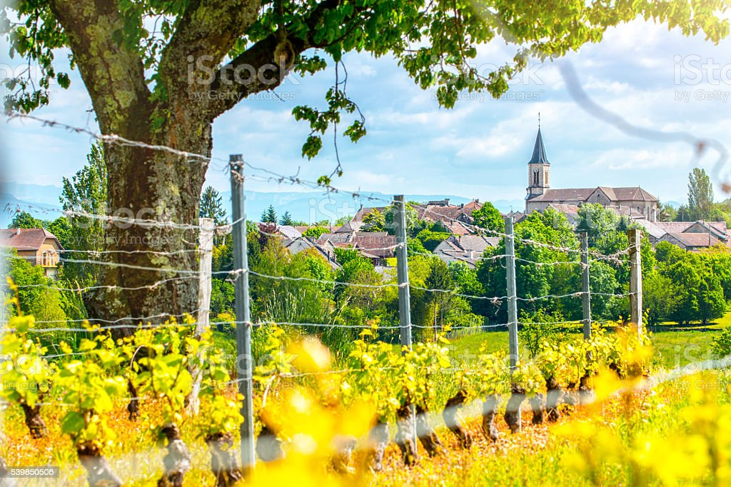 French vineyard with beautiful village in background in spring season stock photo