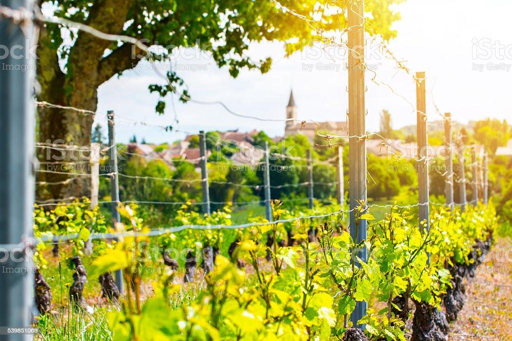 Vignoble français avec magnifique village en arrière-plan au printemps - Photo