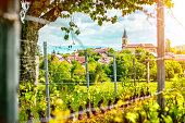 Horizontal composition vibrant color photography of french vineyard with forming grapes and poles in spring season with a beautiful small village with church in background. This picture was taken with a bright sunlight in Bugey mountains, in Ain, Auvergne-Rhone-Alpes region in France (Europe). Grapes overlooking a small French village with brown roofs and a beautiful church. Selective focus on the church and roof in background.