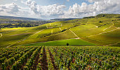 French vineyards (Burgundy) with Epic lighting