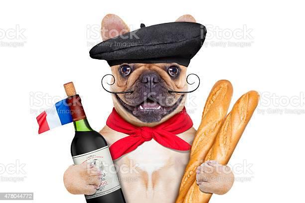 French wine dog picture id478044772?b=1&k=6&m=478044772&s=612x612&h=rapbjnw kdusva0mupgassfzmy65fqdllt vsdyeg68=