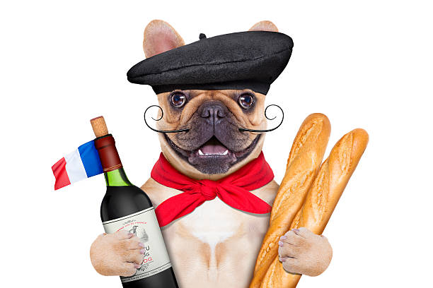 french wine dog french bulldog with red wine and baguette and french  beret hat, isolated on white background french culture stock pictures, royalty-free photos & images