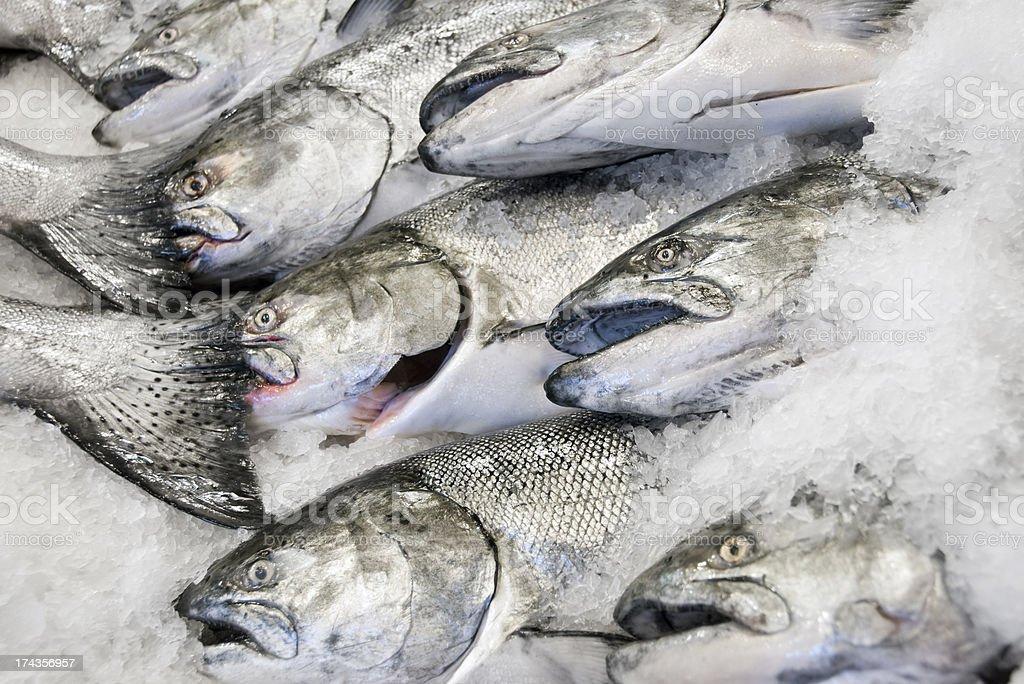 Fresh Alaskan Salmon royalty-free stock photo