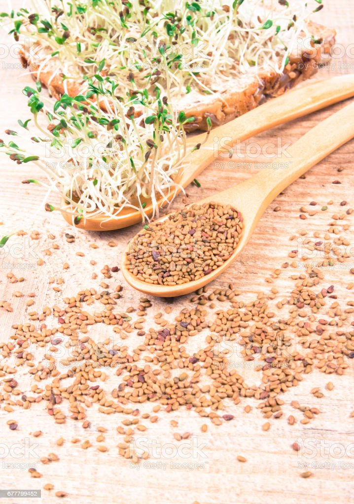 Fresh alfalfa sprouts and seeds - closeup. royalty-free stock photo
