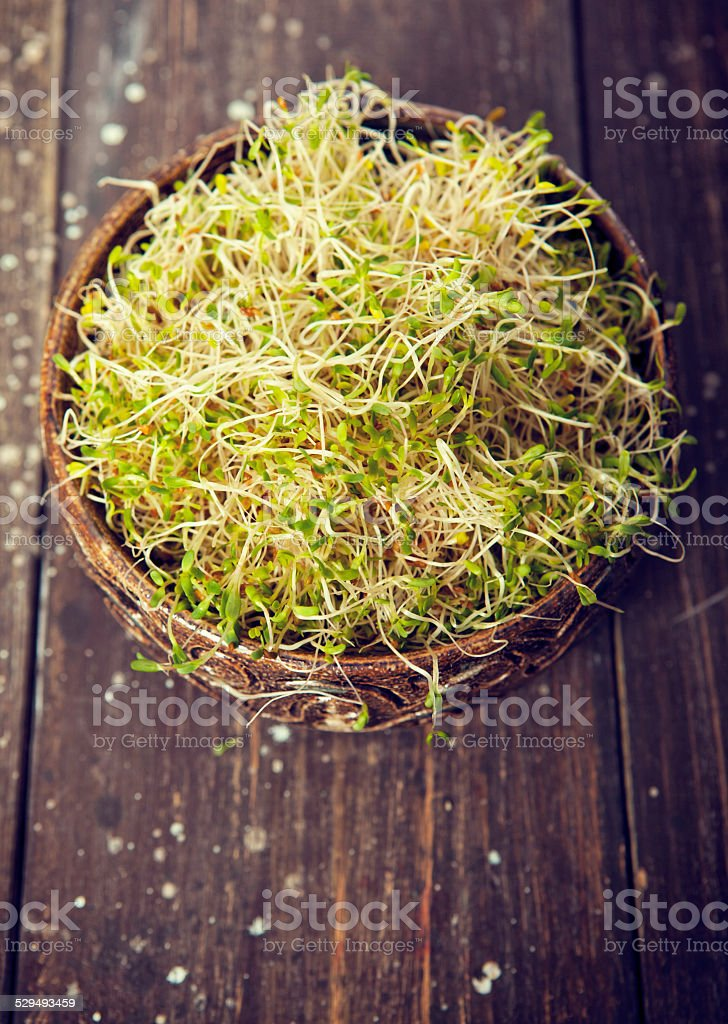 Fresh Alfalfa Sprouts On Wood Background stock photo