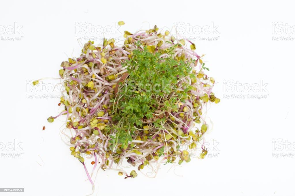 Fresh alfalfa sprouts Стоковые фото Стоковая фотография