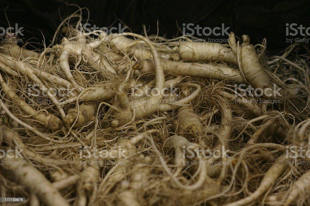 fresh american Ginseng stock photo