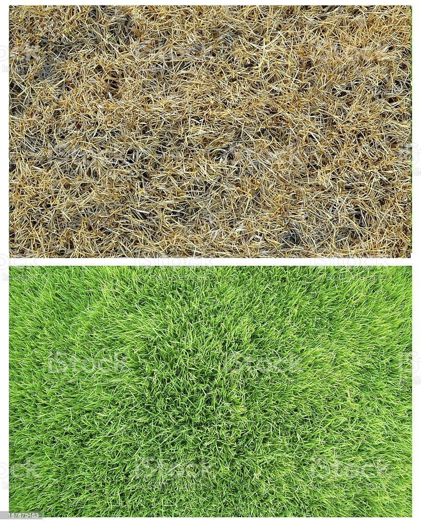 fresh an dried grass stock photo