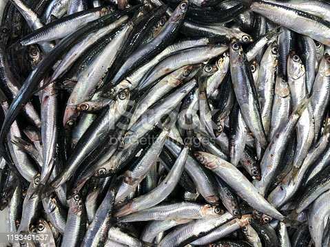 istock Fresh Anchovies on a French Food Market Stall 1193461537