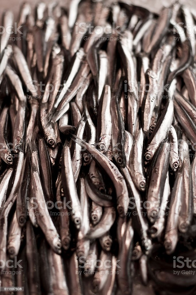 Fresh anchovy on the fish market Fresh anchovy in a fish market in Catania, Sicily, Italy. Anchovy, small fish very popular in Sicilian cuisine from morning catch in Mediterranean sea. Colors are almost monochromatic. Anchovy Stock Photo