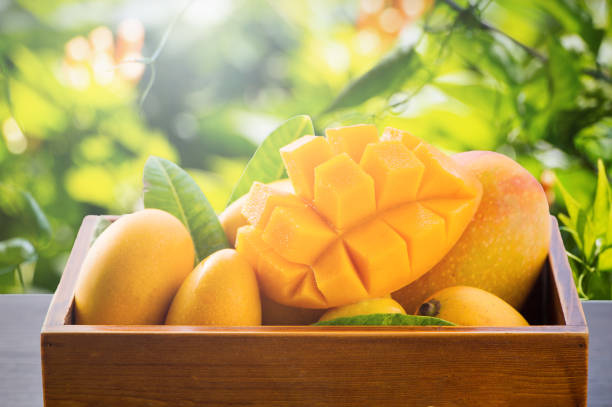 Fresh and beautiful mango fruit in a bamboo basket on nature backgrounds, copy space(text space), blank for text. Fresh and beautiful mango fruit in a bamboo basket on nature backgrounds, copy space(text space), blank for text. mango stock pictures, royalty-free photos & images
