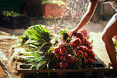 Cropped shot of an unrecognizable female farmer rinsing off freshly picked  produce at her farm