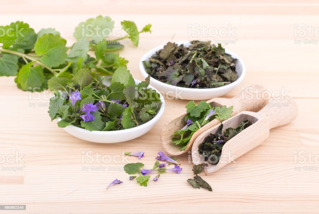 fresh and dried ground ivy royalty-free stock photo