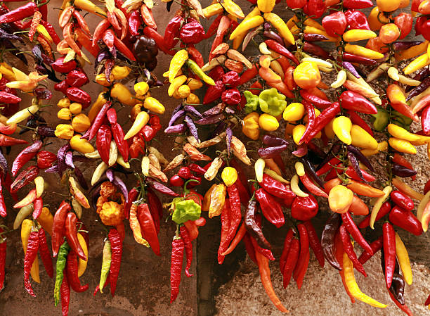 Fresh and dry colorful peppers – Foto