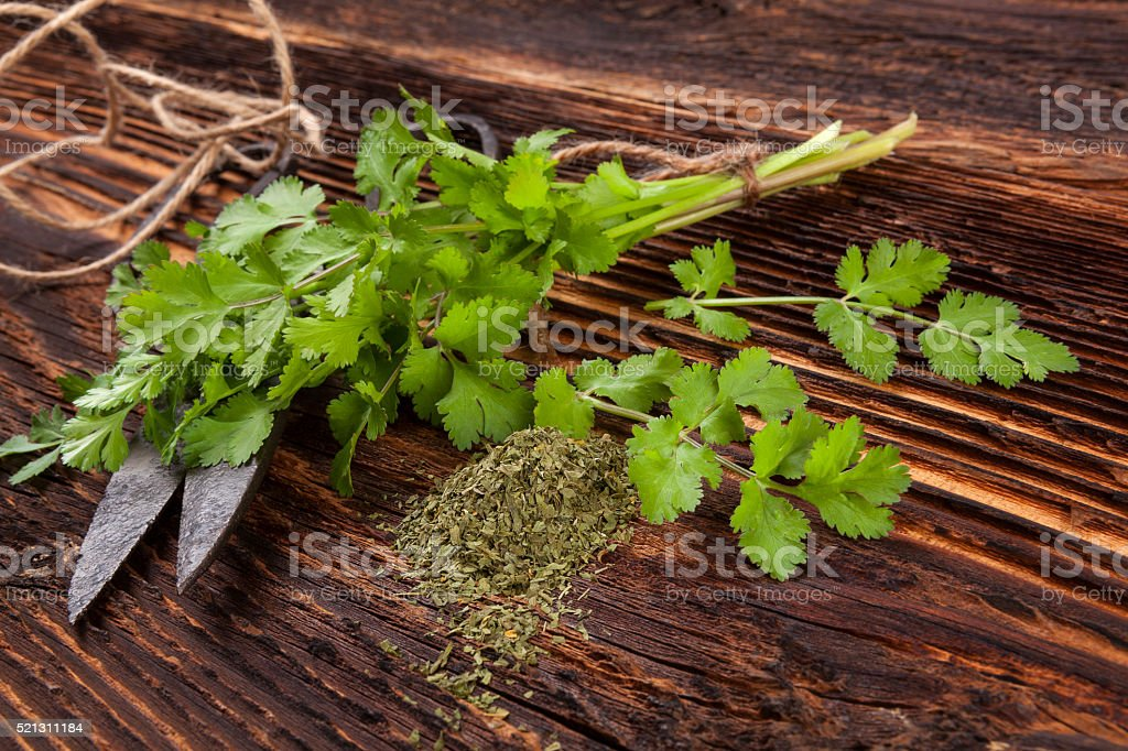 Fresh and dry coriander herb. stock photo